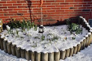 Unter der Schneedecke rührt sich was